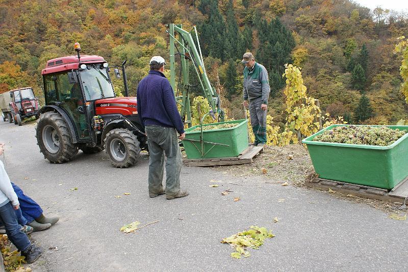 2008-10-26 Traubenlese letzter Tag im Wintricher Simonsberg-54