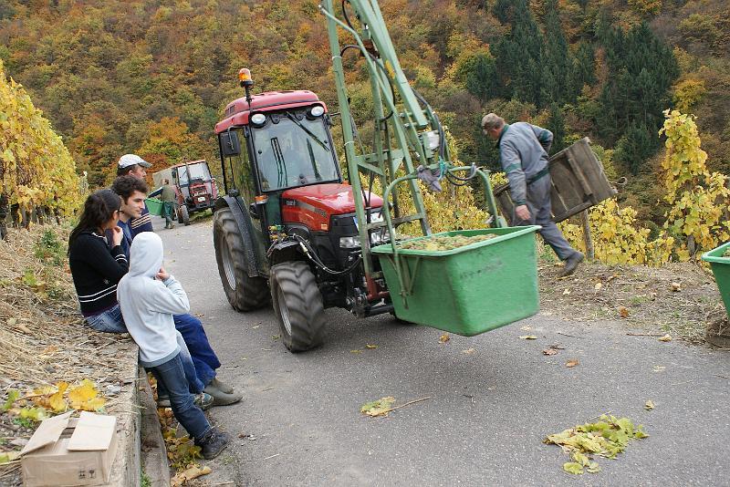 2008-10-26 Traubenlese letzter Tag im Wintricher Simonsberg-55