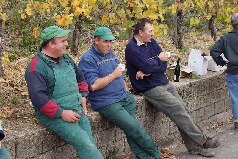 2008-10-26 Traubenlese letzter Tag im Wintricher Simonsberg-58