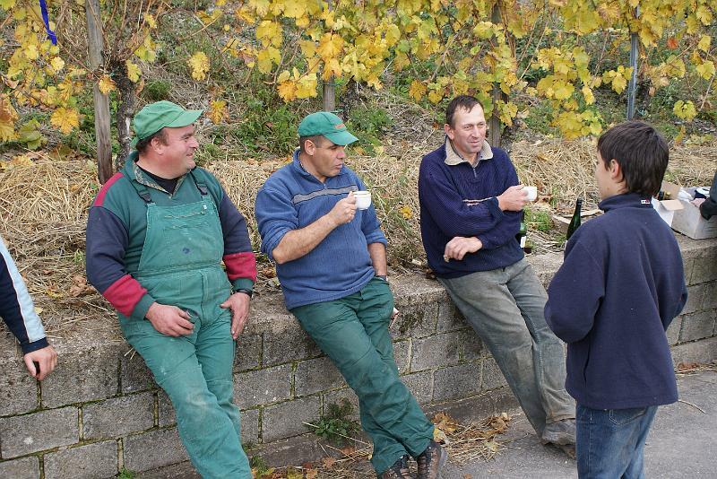 2008-10-26 Traubenlese letzter Tag im Wintricher Simonsberg-60