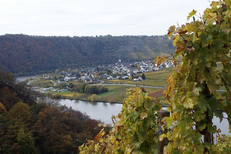 2008-10-26 Traubenlese letzter Tag im Wintricher Simonsberg-8