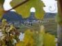 Traubenlese in Wintrich (letzter Tag)